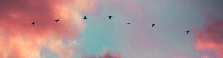Success Story - line of birds flying over multicolored clouds